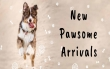Monthly Round Up of New Pet Product Arrivals at AllPetSolutions - October!