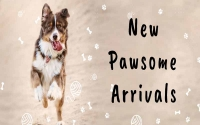 New Pet Product Arrivals at AllPetSolutions - December