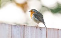 Top 10 Ways to Attracting Birds to Your Garden This Winter