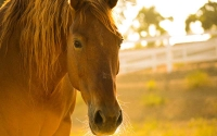 How To Tell If Your Horse Is Stressed